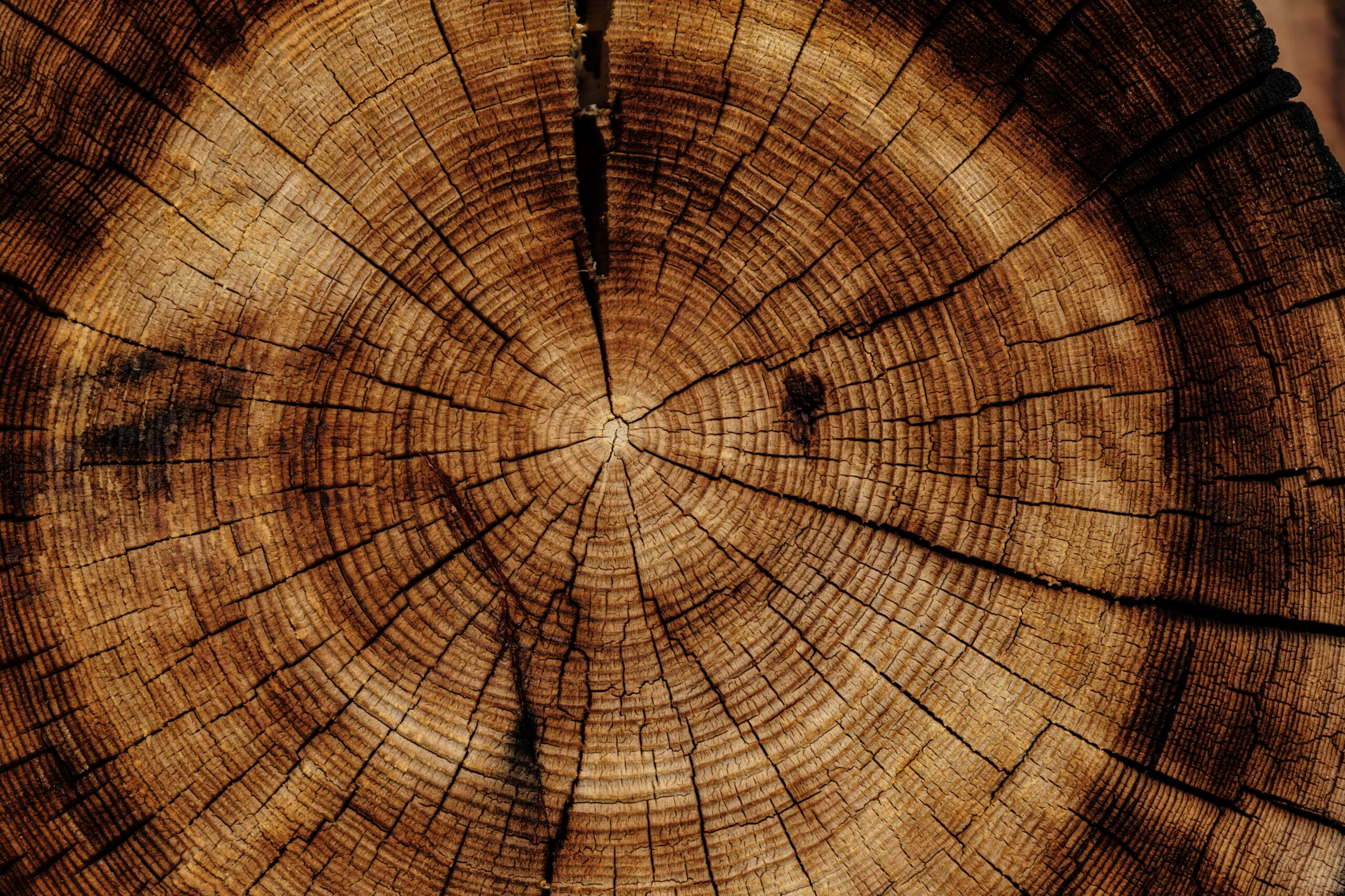 Cupola geodetica in legno: perchè (forse) non è quella giusta